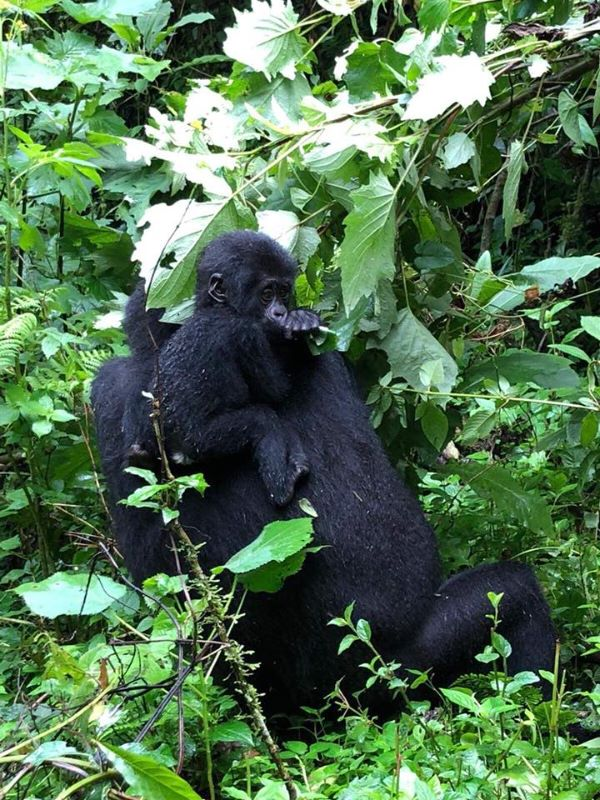 DOBROVOLNICI V PERLE AFRIKY - Ugande